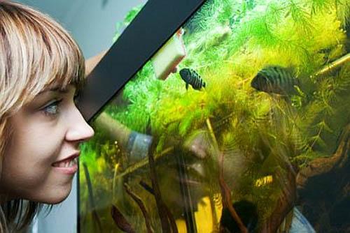 Фильтр для аквариума sunsun
