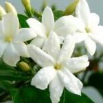 цветочная вода для кожи