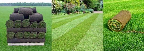 укладка рулонный газон